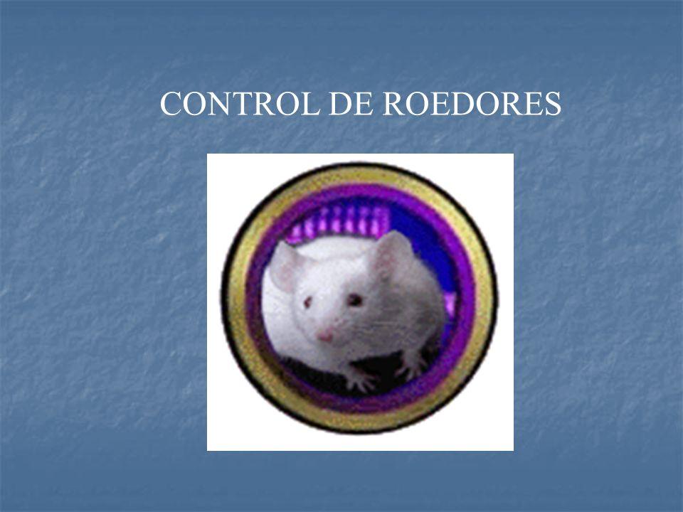 RATON DOMESTICO RATON DOMESTICO (Mus musculus) (Mus musculus) RATA NEGRA RATA NEGRA (Rattus rattus) (Rattus rattus) RATUS COMUN RATUS COMUN (Rattus norvegicus) (Rattus norvegicus)