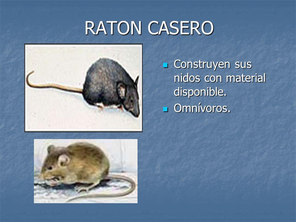 RATON CASERO Construyen sus nidos con material disponible. Construyen sus nidos con material disponible. Omnívoros. Omnívoros.