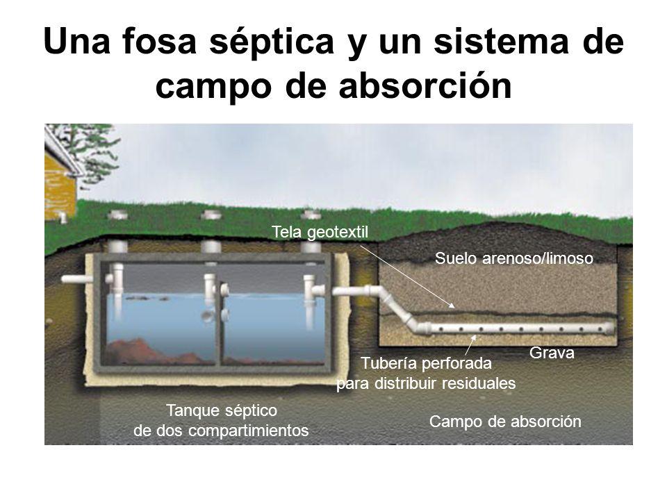 Una fosa séptica y un sistema de campo de absorción Tela geotextil Suelo arenoso/limoso Tubería perforada para distribuir residuales Tanque séptico de