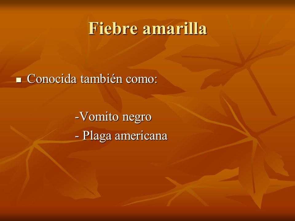 Fiebre amarilla Conocida también como: Conocida también como: -Vomito negro -Vomito negro - Plaga americana - Plaga americana