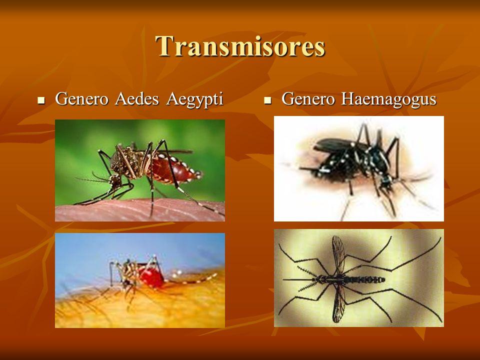 Transmisores Genero Aedes Aegypti Genero Aedes Aegypti Genero Haemagogus Genero Haemagogus