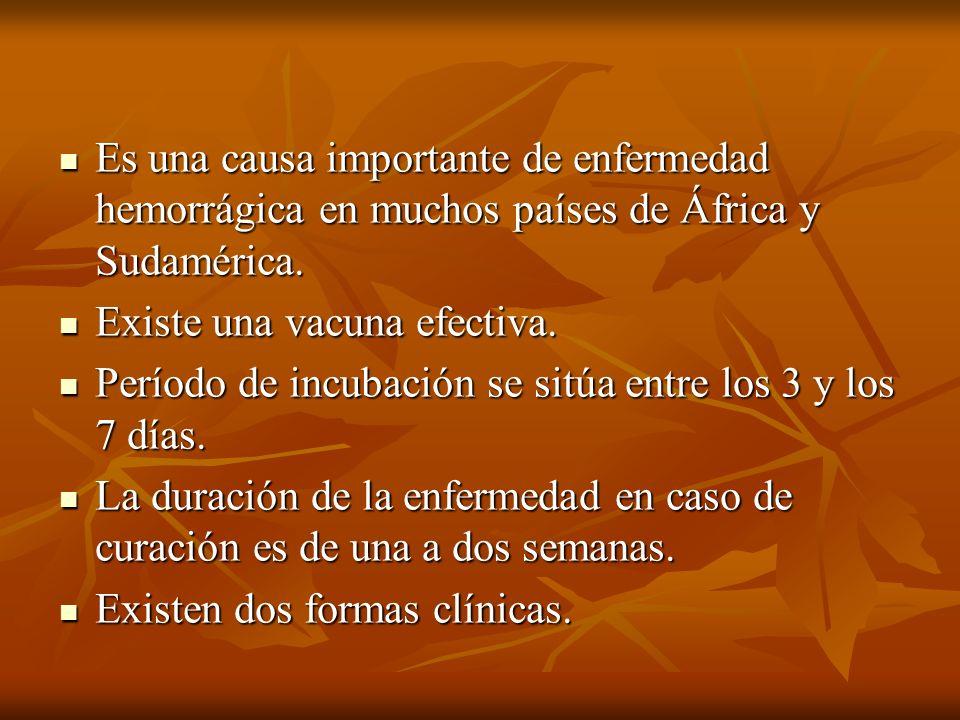 Es una causa importante de enfermedad hemorrágica en muchos países de África y Sudamérica. Es una causa importante de enfermedad hemorrágica en muchos