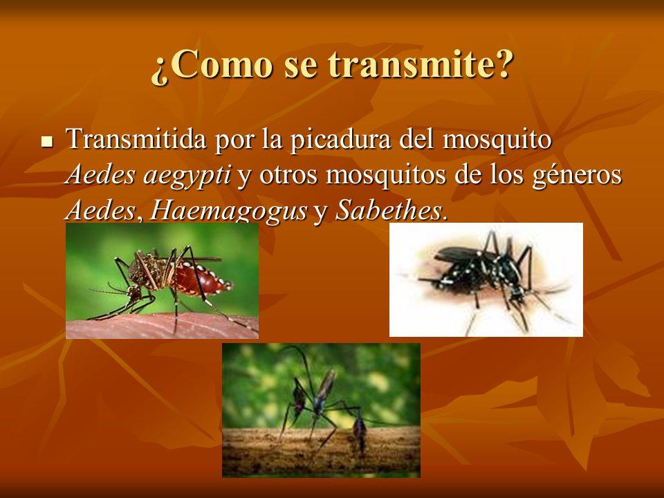 ¿Como se transmite? Transmitida por la picadura del mosquito Aedes aegypti y otros mosquitos de los géneros Aedes, Haemagogus y Sabethes. Transmitida