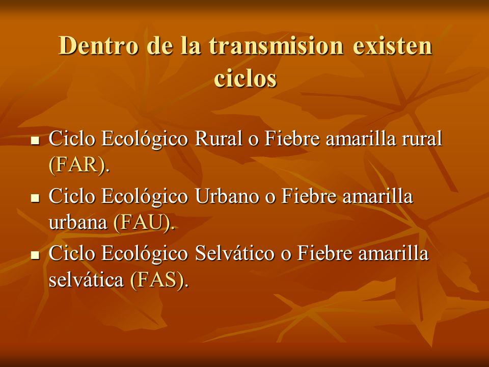 Dentro de la transmision existen ciclos Ciclo Ecológico Rural o Fiebre amarilla rural (FAR). Ciclo Ecológico Rural o Fiebre amarilla rural (FAR). Cicl