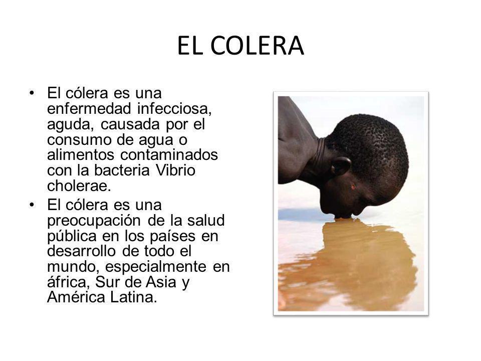 EL COLERA El cólera es una enfermedad infecciosa, aguda, causada por el consumo de agua o alimentos contaminados con la bacteria Vibrio cholerae. El c