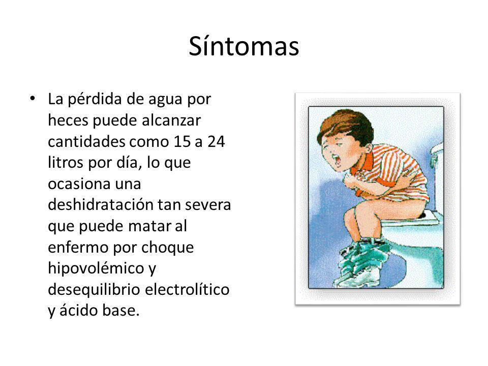 Síntomas La pérdida de agua por heces puede alcanzar cantidades como 15 a 24 litros por día, lo que ocasiona una deshidratación tan severa que puede m