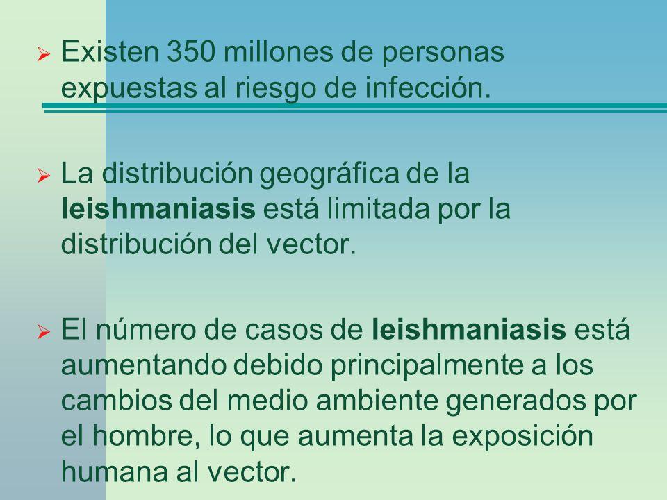 Existen 350 millones de personas expuestas al riesgo de infección. La distribución geográfica de la leishmaniasis está limitada por la distribución de