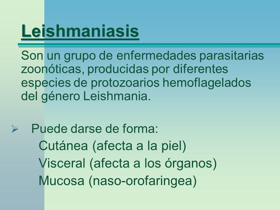 Leishmaniasis Son un grupo de enfermedades parasitarias zoonóticas, producidas por diferentes especies de protozoarios hemoflagelados del género Leish