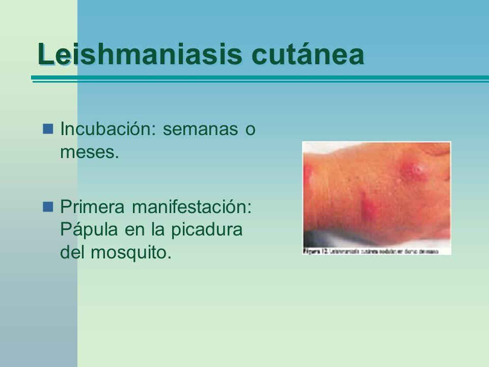 Leishmaniasis cutánea Incubación: semanas o meses. Primera manifestación: Pápula en la picadura del mosquito.