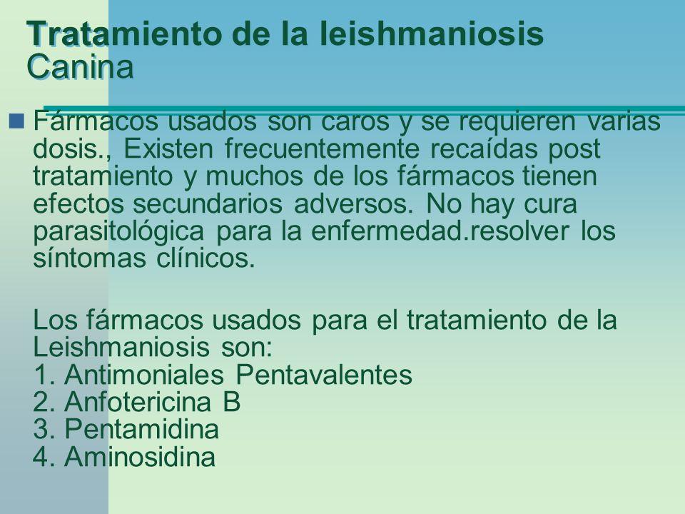 Tratamiento de la leishmaniosis Canina Fármacos usados son caros y se requieren varias dosis., Existen frecuentemente recaídas post tratamiento y much