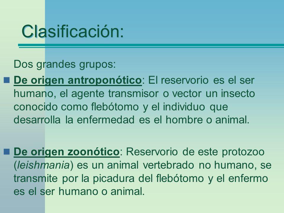 Clasificación: Dos grandes grupos: De origen antroponótico: El reservorio es el ser humano, el agente transmisor o vector un insecto conocido como fle