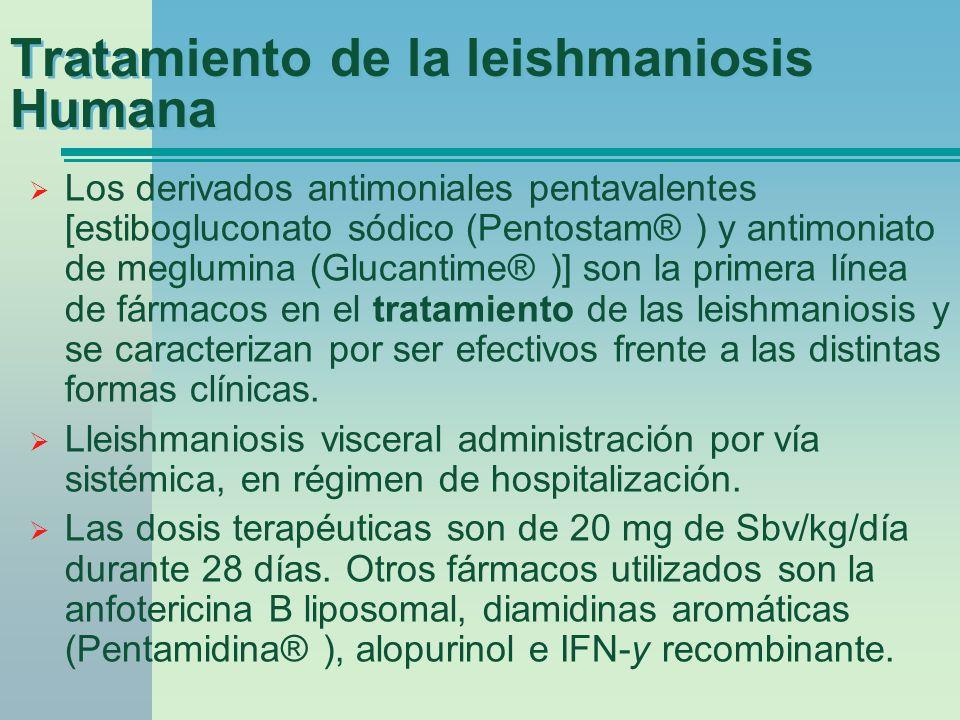 Tratamiento de la leishmaniosis Humana Los derivados antimoniales pentavalentes [estibogluconato sódico (Pentostam® ) y antimoniato de meglumina (Gluc