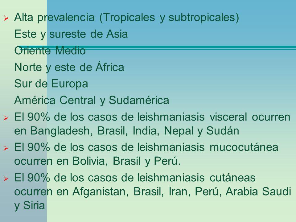 Alta prevalencia (Tropicales y subtropicales) Este y sureste de Asia Oriente Medio Norte y este de África Sur de Europa América Central y Sudamérica E
