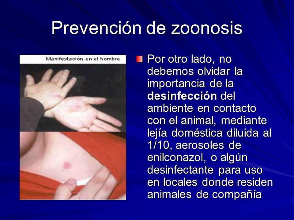 Prevención de zoonosis Por otro lado, no debemos olvidar la importancia de la desinfección del ambiente en contacto con el animal, mediante lejía doméstica diluida al 1/10, aerosoles de enilconazol, o algún desinfectante para uso en locales donde residen animales de compañía