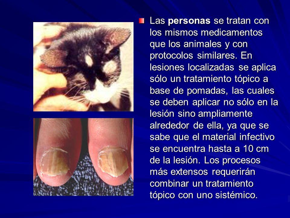 Las personas se tratan con los mismos medicamentos que los animales y con protocolos similares.
