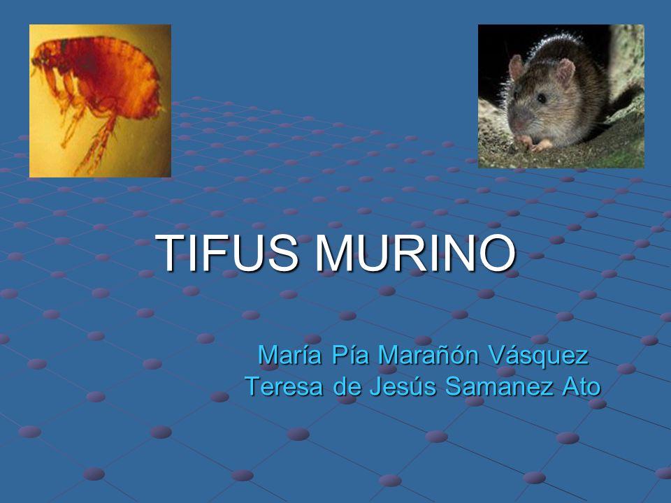 TIFUS MURINO María Pía Marañón Vásquez Teresa de Jesús Samanez Ato