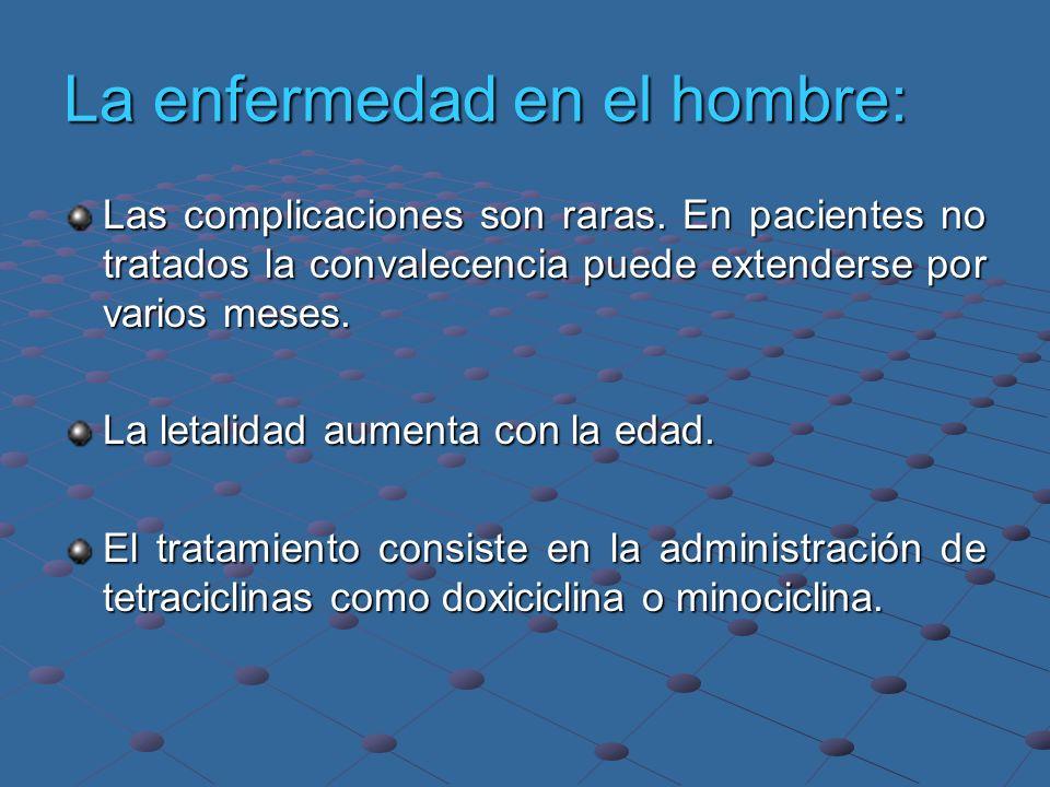 La enfermedad en el hombre: Las complicaciones son raras. En pacientes no tratados la convalecencia puede extenderse por varios meses. La letalidad au