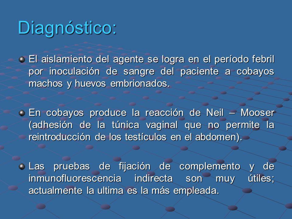 Diagnóstico: El aislamiento del agente se logra en el período febril por inoculación de sangre del paciente a cobayos machos y huevos embrionados. En