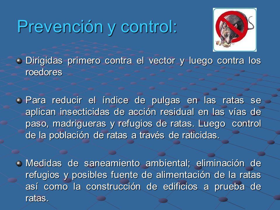 Prevención y control: Dirigidas primero contra el vector y luego contra los roedores Para reducir el índice de pulgas en las ratas se aplican insectic