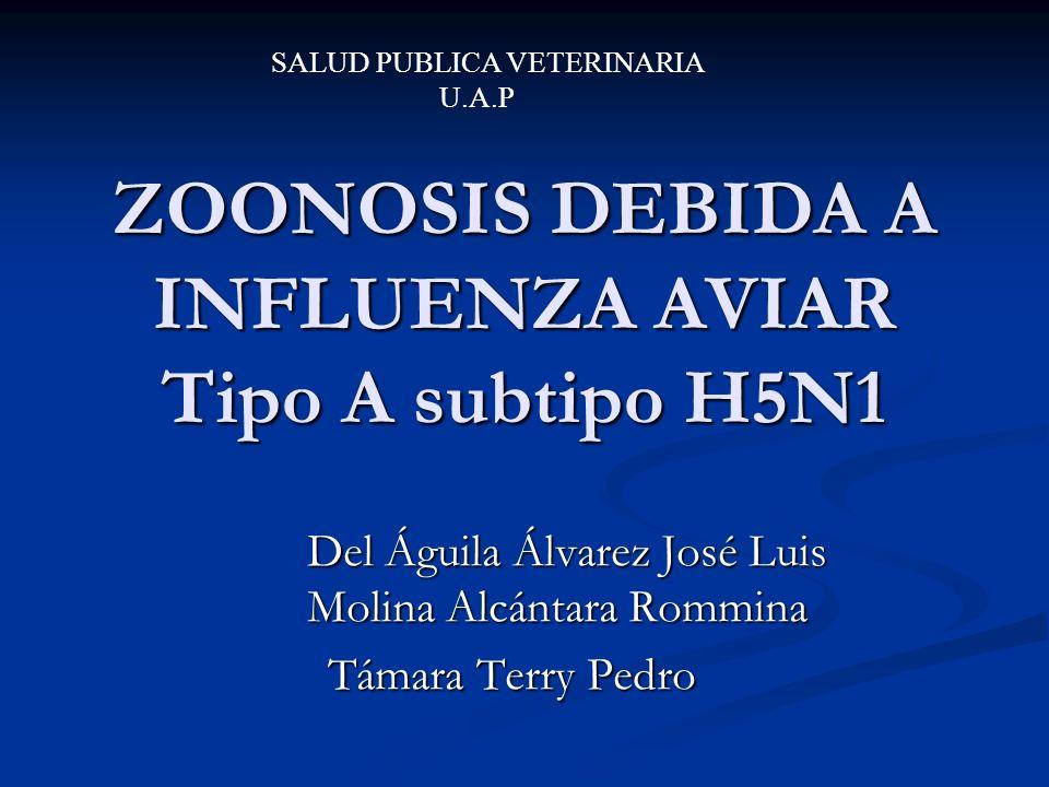 INFLUENZA AVIAR Enfermedad viral de aves domesticas y salvajes Enfermedad viral de aves domesticas y salvajes El periodo de incubación es muy variable desde pocos días a semana (3 a 7 días).