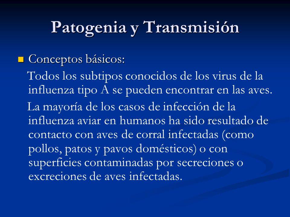 Patogenia y Transmisión Conceptos básicos: Conceptos básicos: Todos los subtipos conocidos de los virus de la influenza tipo A se pueden encontrar en