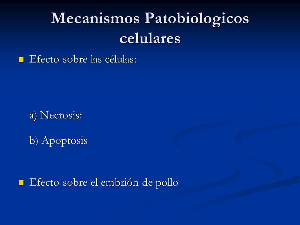 Mecanismos Patobiologicos celulares Efecto sobre las células: Efecto sobre las células: a) Necrosis: b) Apoptosis Efecto sobre el embrión de pollo Efe