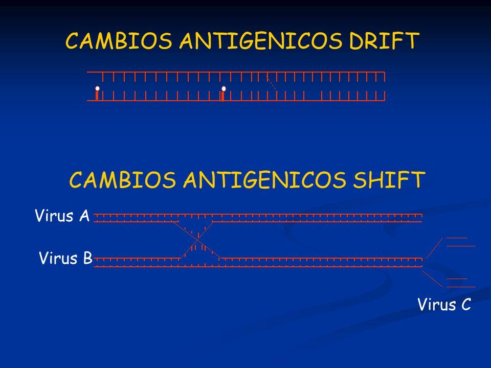 CAMBIOS ANTIGENICOS DRIFT CAMBIOS ANTIGENICOS SHIFT Virus C