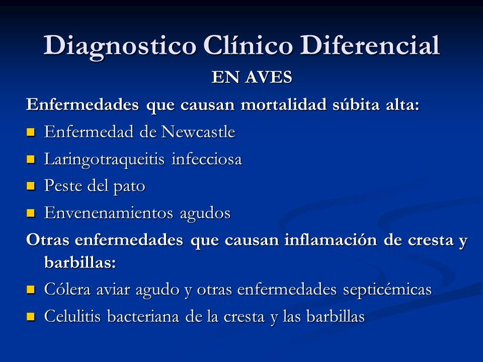 Diagnostico Clínico Diferencial EN AVES Enfermedades que causan mortalidad súbita alta: Enfermedad de Newcastle Enfermedad de Newcastle Laringotraquei