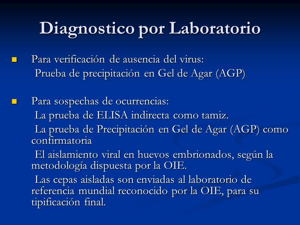 Diagnostico por Laboratorio Para verificación de ausencia del virus: Para verificación de ausencia del virus: Prueba de precipitación en Gel de Agar (