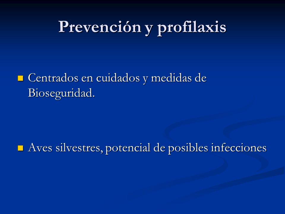 Prevención y profilaxis Centrados en cuidados y medidas de Bioseguridad. Centrados en cuidados y medidas de Bioseguridad. Aves silvestres, potencial d