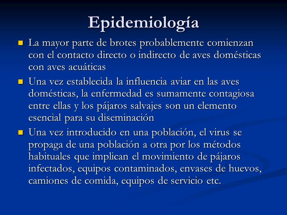 Epidemiología La mayor parte de brotes probablemente comienzan con el contacto directo o indirecto de aves domésticas con aves acuáticas La mayor part