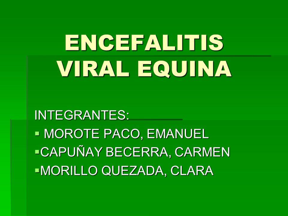 DEFINICION Las encefalitis o encefalomielitis equinas son enfermedades nerviosas que afectan al caballo, a otros animales domésticos o salvajes, y al hombre.