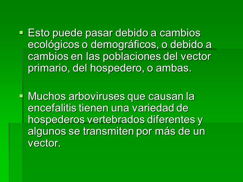 CICLO ENZOOTICO DE ENCEFALITIS EQUINA VENEZOLANA (Peste Loca o Mal del Rayo) Infección en el hombre: casos esporádicos clínicos y subclinicos