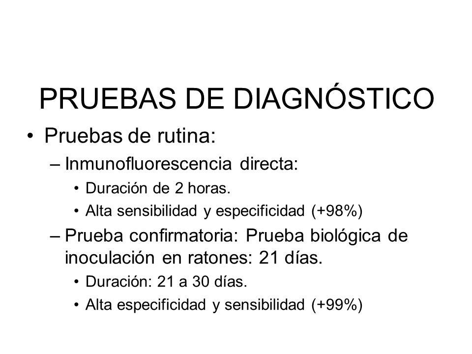 PRUEBAS DE DIAGNÓSTICO Pruebas de rutina: –Inmunofluorescencia directa: Duración de 2 horas. Alta sensibilidad y especificidad (+98%) –Prueba confirma