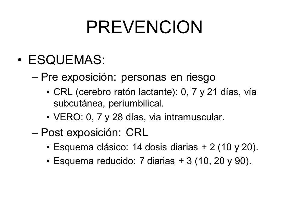 PREVENCION ESQUEMAS: –Pre exposición: personas en riesgo CRL (cerebro ratón lactante): 0, 7 y 21 días, vía subcutánea, periumbilical. VERO: 0, 7 y 28