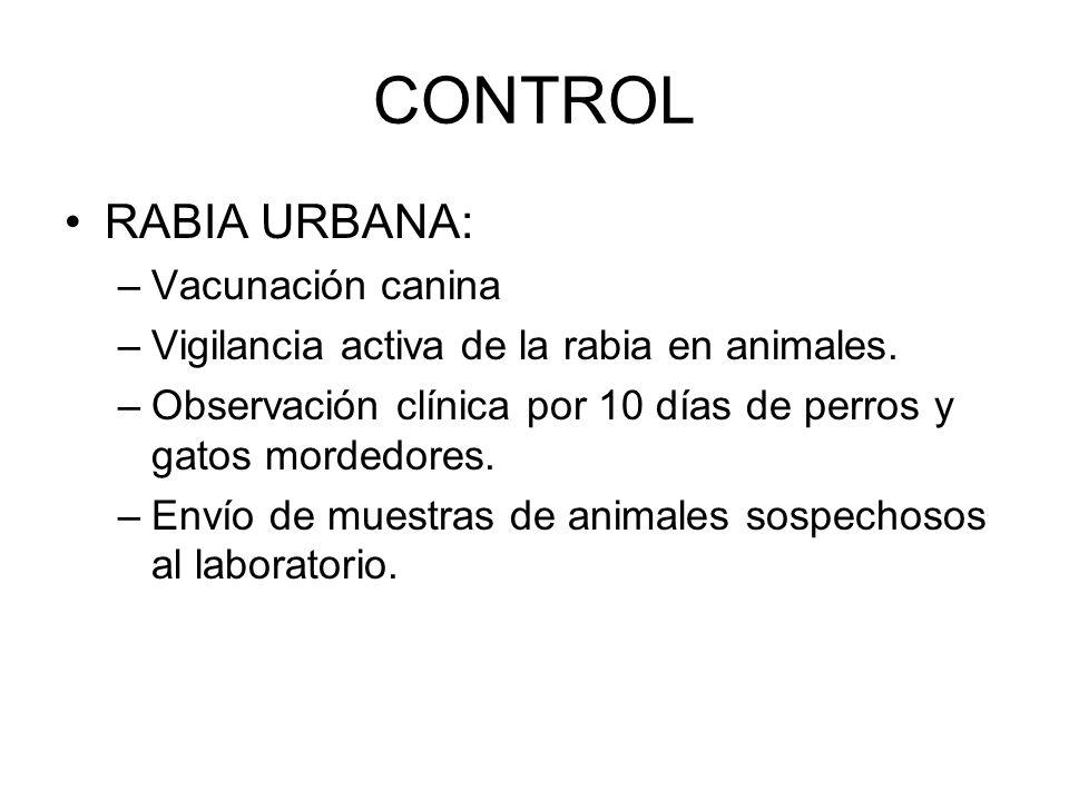 CONTROL RABIA URBANA: –Vacunación canina –Vigilancia activa de la rabia en animales. –Observación clínica por 10 días de perros y gatos mordedores. –E