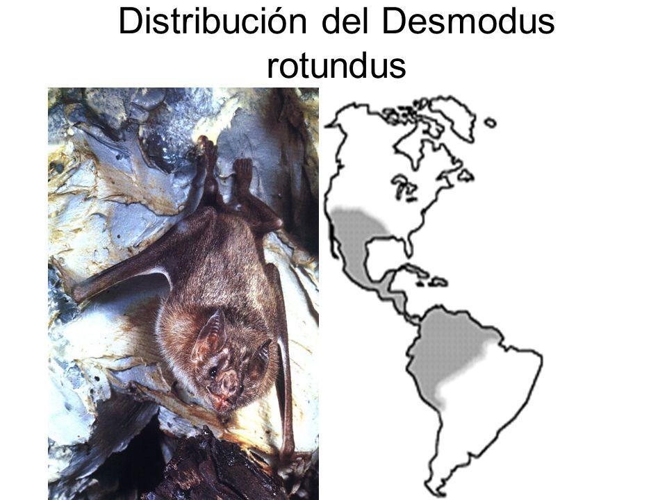 Distribución del Desmodus rotundus