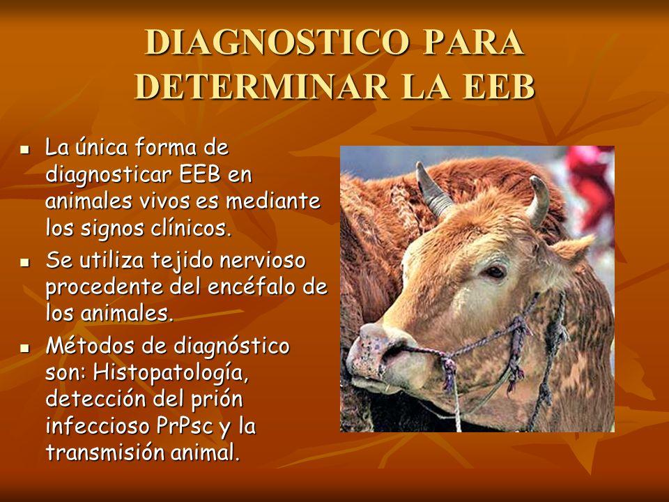 DIAGNOSTICO PARA DETERMINAR LA EEB La única forma de diagnosticar EEB en animales vivos es mediante los signos clínicos. La única forma de diagnostica
