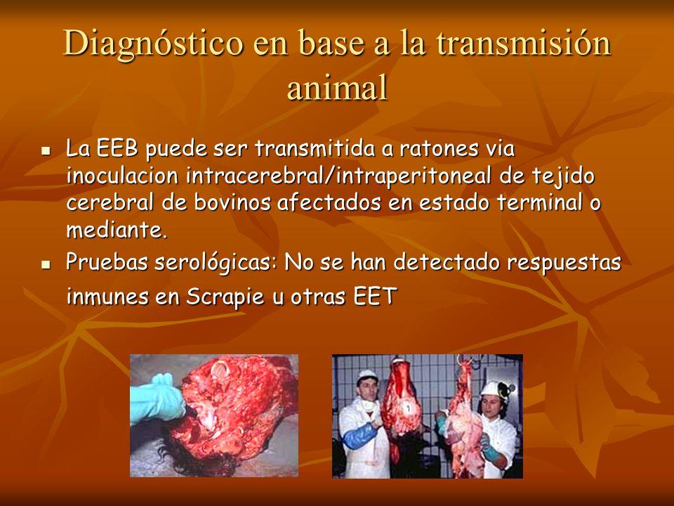 Diagnóstico en base a la transmisión animal La EEB puede ser transmitida a ratones via inoculacion intracerebral/intraperitoneal de tejido cerebral de