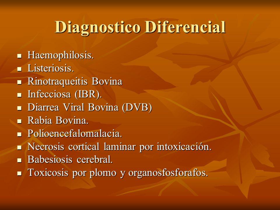 Diagnostico Diferencial Haemophilosis. Haemophilosis. Listeriosis. Listeriosis. Rinotraqueitis Bovina Rinotraqueitis Bovina Infecciosa (IBR). Infeccio