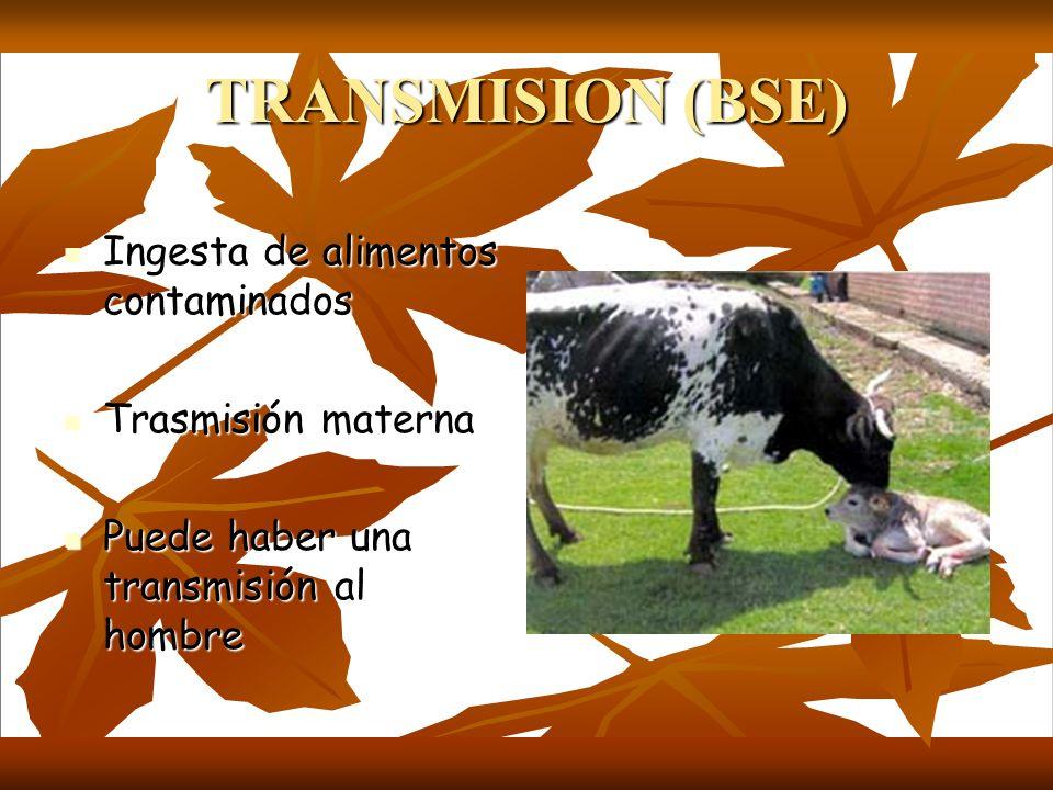 TRANSMISION (BSE) Ingesta de alimentos contaminados Ingesta de alimentos contaminados Trasmisión materna Trasmisión materna Puede haber una transmisió