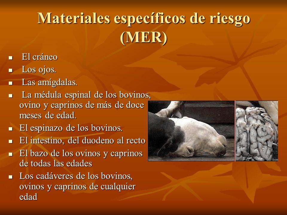 Materiales específicos de riesgo (MER) El cráneo El cráneo Los ojos. Los ojos. Las amígdalas. Las amígdalas. La médula espinal de los bovinos, ovino y