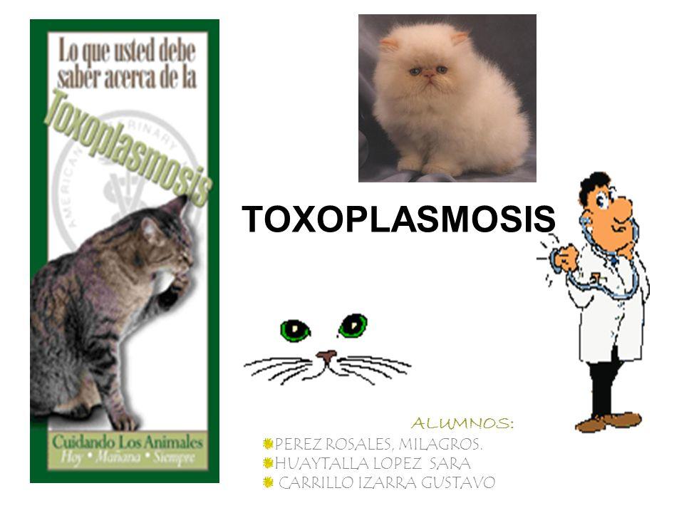 TOXOPLASMOSIS ALUMNOS: PEREZ ROSALES, MILAGROS. HUAYTALLA LOPEZ SARA CARRILLO IZARRA GUSTAVO