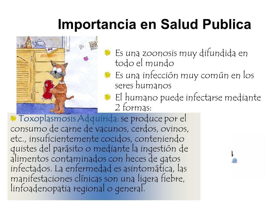 Toxoplasmosis Adquirida: se produce por el consumo de carne de vacunos, cerdos, ovinos, etc., insuficientemente cocidos, conteniendo quistes del parás