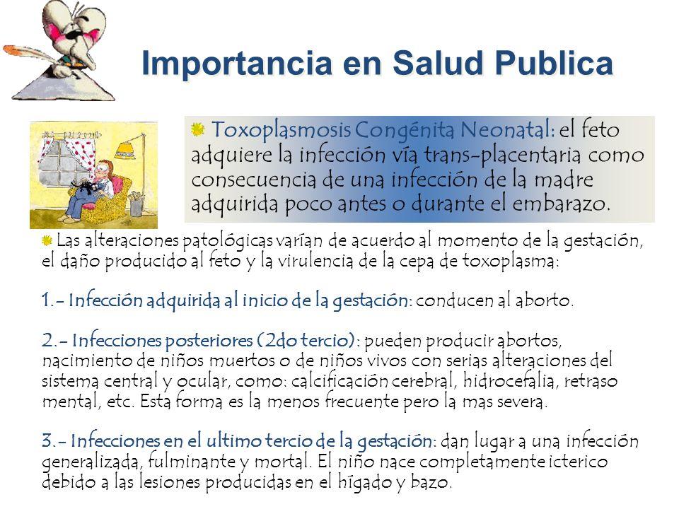 Importancia en Salud Publica Toxoplasmosis Congénita Neonatal: el feto adquiere la infección vía trans-placentaria como consecuencia de una infección