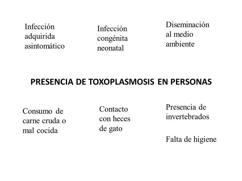 PRESENCIA DE TOXOPLASMOSIS EN PERSONAS Consumo de carne cruda o mal cocida Contacto con heces de gato Presencia de invertebrados Falta de higiene Infe
