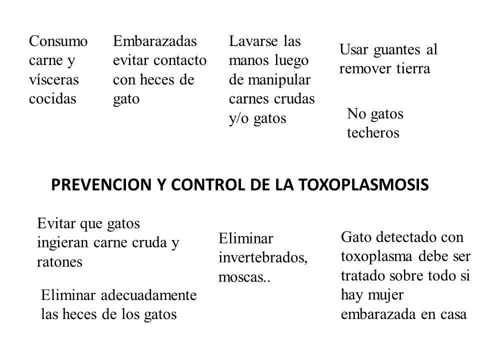 PREVENCION Y CONTROL DE LA TOXOPLASMOSIS Consumo carne y vísceras cocidas Embarazadas evitar contacto con heces de gato Lavarse las manos luego de man