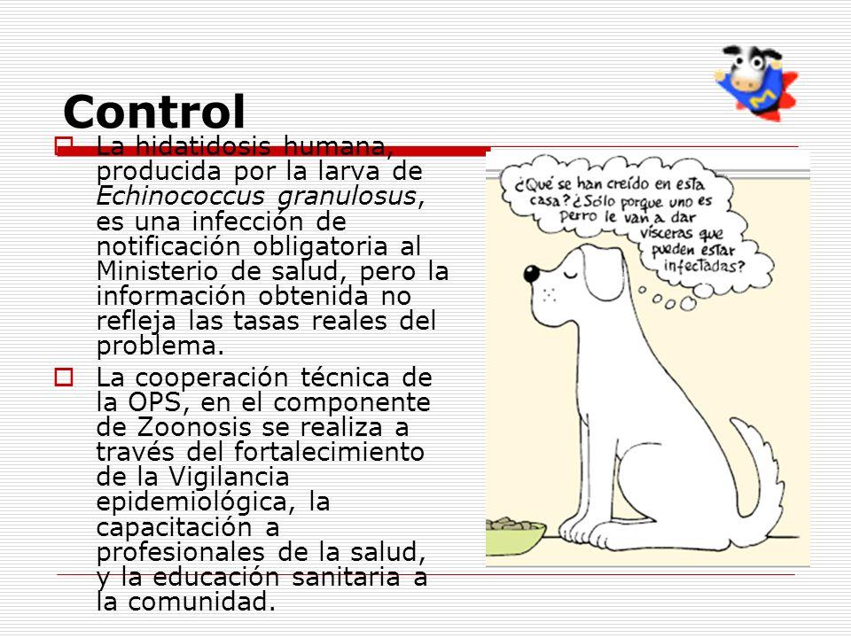 Control La hidatidosis humana, producida por la larva de Echinococcus granulosus, es una infección de notificación obligatoria al Ministerio de salud,