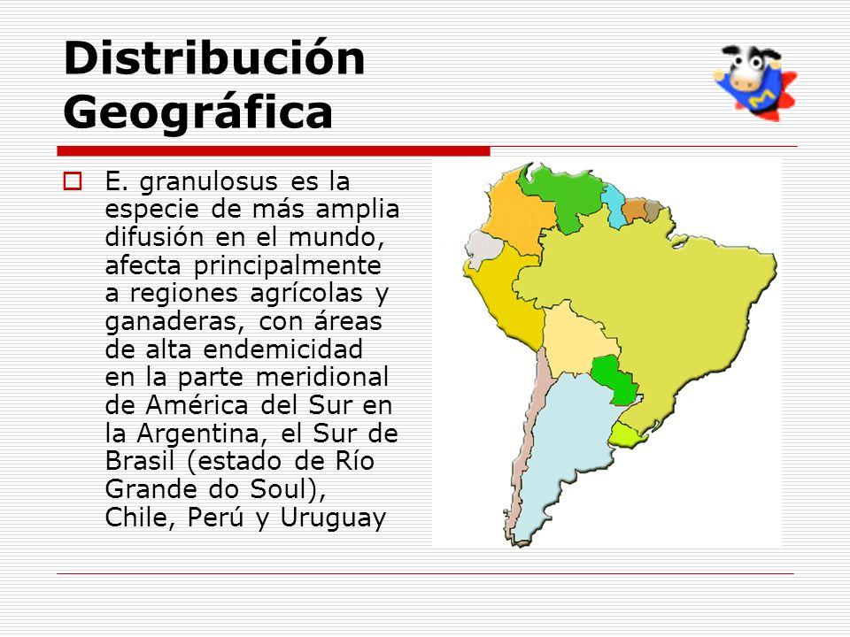 Distribución Geográfica E. granulosus es la especie de más amplia difusión en el mundo, afecta principalmente a regiones agrícolas y ganaderas, con ár