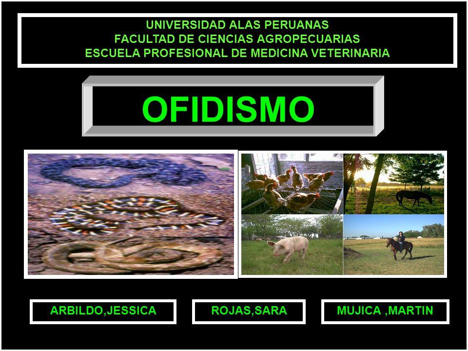 UNIVERSIDAD ALAS PERUANAS FACULTAD DE CIENCIAS AGROPECUARIAS ESCUELA PROFESIONAL DE MEDICINA VETERINARIA MUJICA,MARTINARBILDO,JESSICAROJAS,SARA OFIDISMO